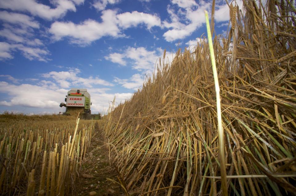 Stoppelfeld mit Mähdrescher Landwirtschaft © Hannes Schleeh