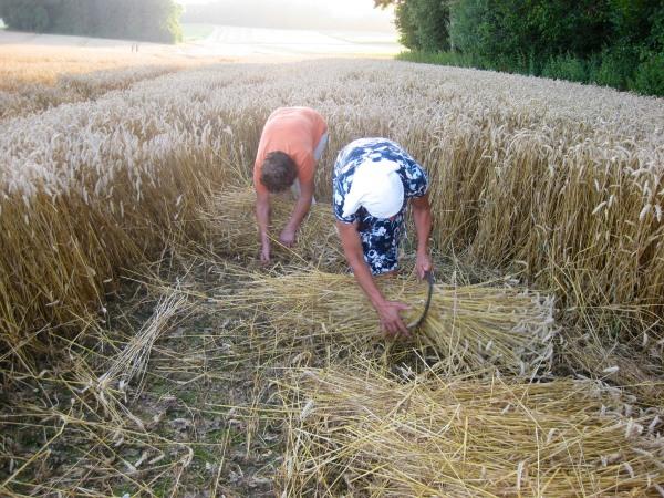 Getreidebündel machen