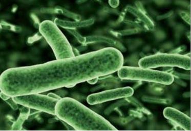 Mikroorganismen Quelle Viessmann