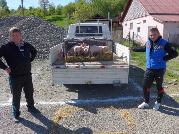 Schweinemarkt Hodac