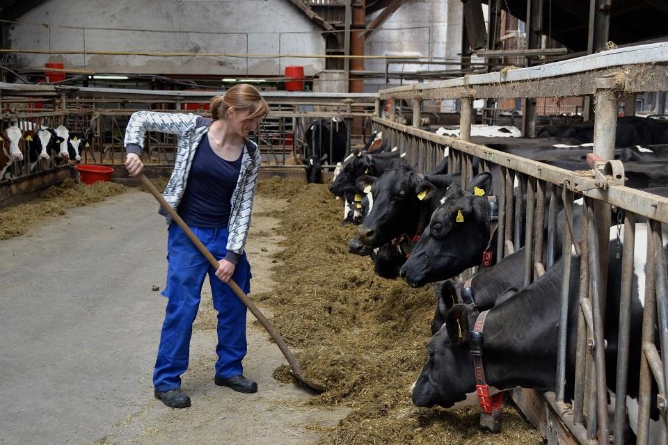 Foto: Deutsche Bank 2014 125 Milchkühe warten auf dem Milchviehbetrieb Scheffer auf ihre allmorgendliche Futterration. Dass die Lehrlinge dafür früh aus den Federn müssen, ist für Sabrina und ihre Kollegen kein Problem.
