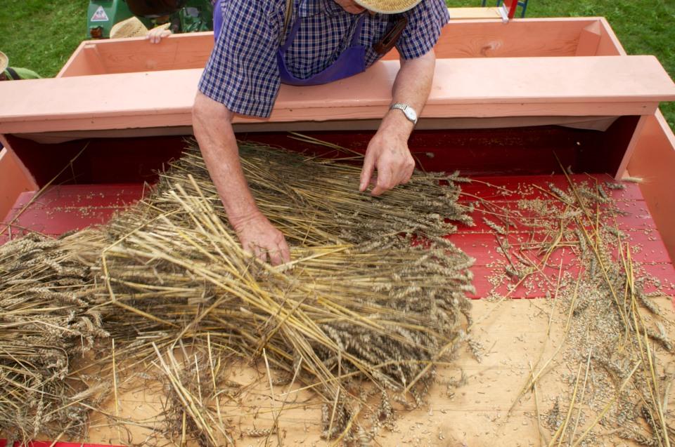 Bestückung des Dreschwagens mit den Getreidebündeln